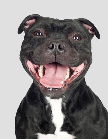 Photo de chiens > Taz Qui Rit > N° 614304 sur Photos Animaux