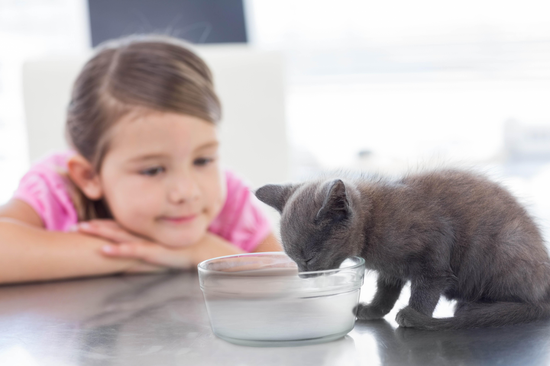 Petit chat qui boit de l'eau à la Clinique vétérinaire des petits animaux de l'Estrie