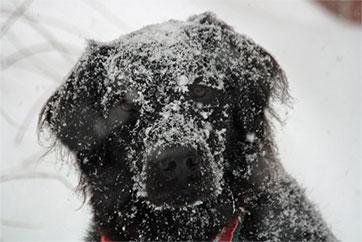 Chien hiver qui joue dans la neige