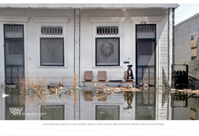 Article de blogue Le sauvetage des animaux de l'Ouragan Katrina : Qu'avons-nous appris en dix ans?