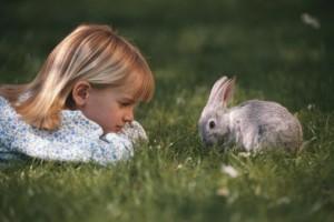 Article de blogue La stérilisation, c'est aussi pour les lapins!